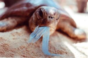 impacto en la fauna del plástico